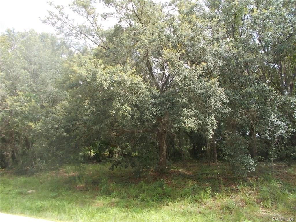 2611-DELTA-BLUE-Citrus-Springs-FL-34434