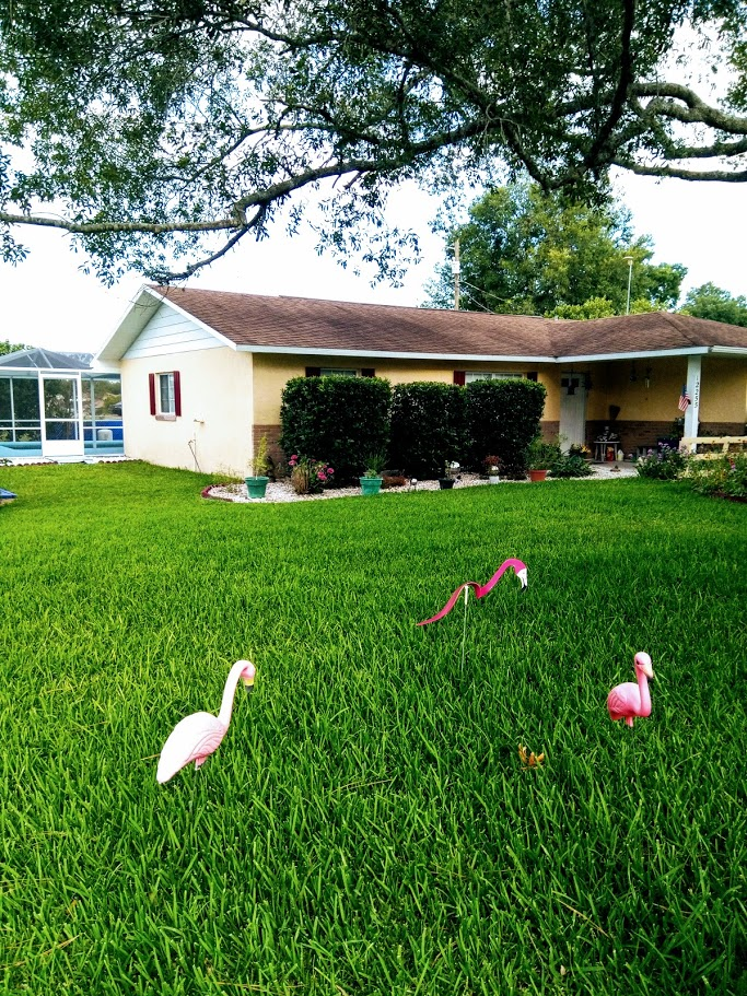 home for sale by owner in belleview